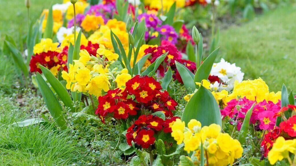 Jakie Kwiaty Kwitna Na Wiosne Poradnik Ogrody Warszawy