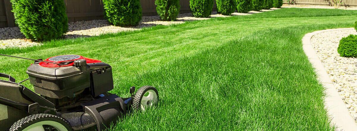 Trawniki i nawierzchnia